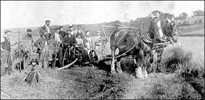 "The ""Back Delivery Reaper"". The crop is cut and when the horseman decides the bundle is big enough to make a sheaf he operated a lever, which left the bundle on the ground to be tied manually into a sheaf. The sheaves were then built into a ""stook"" of six sheaves and left to dry. George Wilson stands to the left of picture while a young girl makes a corn dolly from straw."