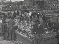 "Gutters at the Farlane. A Greenhill curing yard, Keith Inch, Peterhead c1900. Throughout the boom years of the 19th and early 20th century, the land based workforce - the ""guttin' quines and cooper loons"" played as vital a role in the industry's success as the fishermen did at sea. courtesy Arbuthnot Museum"