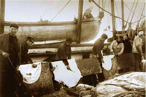 Scraping walrus skins aboard s.s. Eclipse